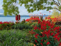 Blumen an der Uferpromenade in Überlingen