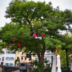 Gießkannen im Baum in Überlingen