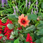 Schöne Pflanzen in Überlingen