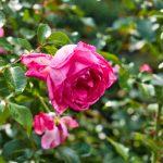 Schöne Pflanzen in Überlingen 2