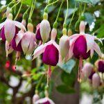 Schöne Pflanzen in Überlingen 4
