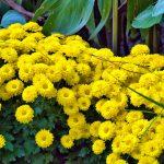 Blumen in den Gärten von Schloss Trauttmansdorf 3
