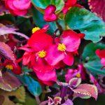 Blumen in den Gärten von Schloss Trauttmansdorf 9