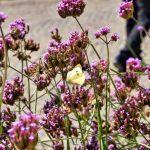 Impressionen aus Meran Schmetterling