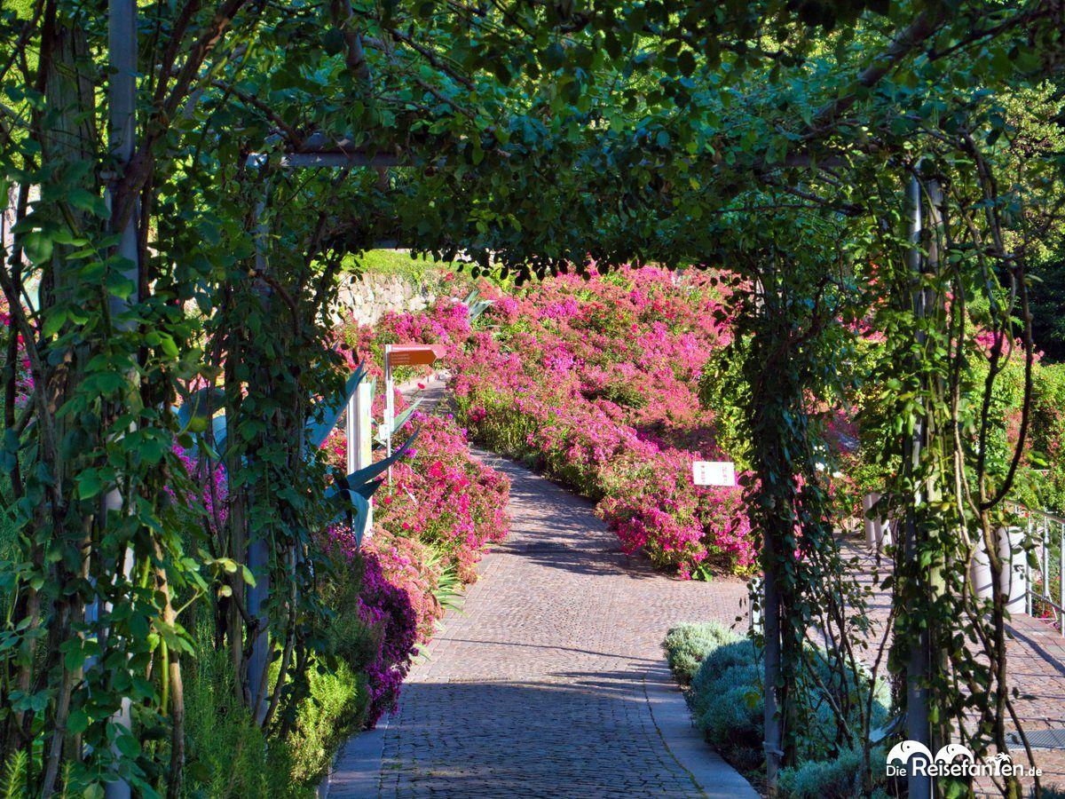 Schöne Wege in den Gärten von Schloss Trauttmansdorf