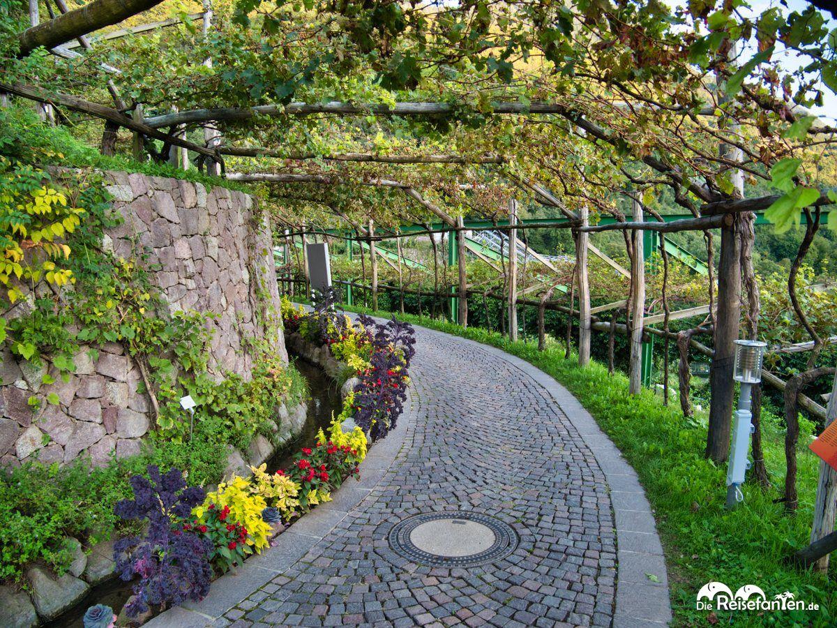 Weingang in den Gärten von Schloss Trauttmansdorf