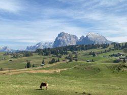 Idyllische Seiser Alm in Südtirol