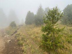Nebelweg auf der Seiser Alm in Südtirol