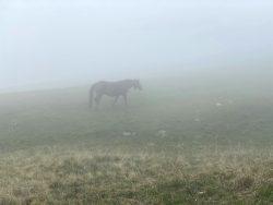 Pferd im Nebel auf der Seiser Alm in Südtirol