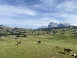 Pferde auf der Seiser Alm in Südtirol
