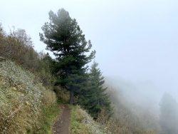 Schmaler Wanderweg auf der Seiser Alm in Südtirol