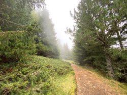 Wanderweg auf der Seiser Alm