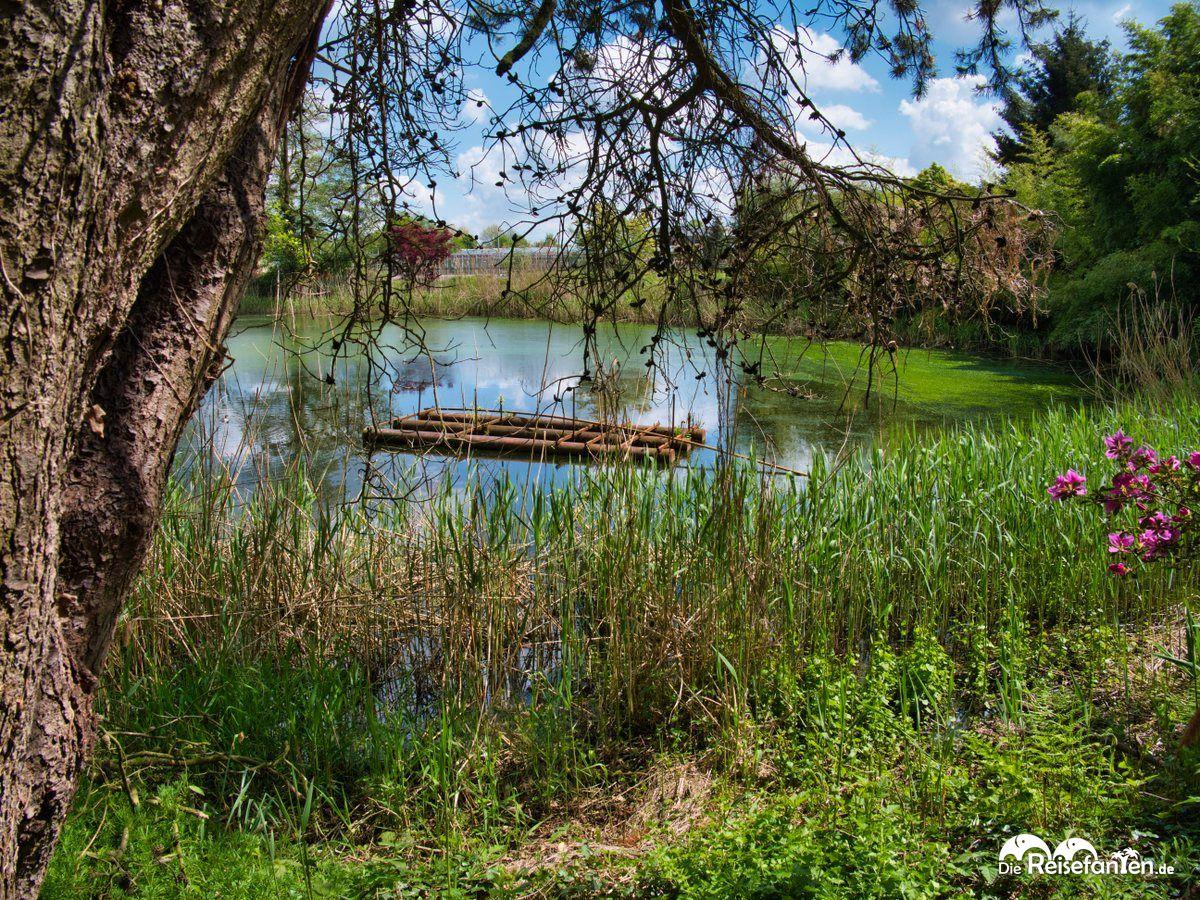 See mit Algenbewuchs im Park der Gärten