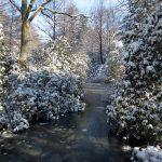 Der Rhododendron Park in Bremen im Januar 2021