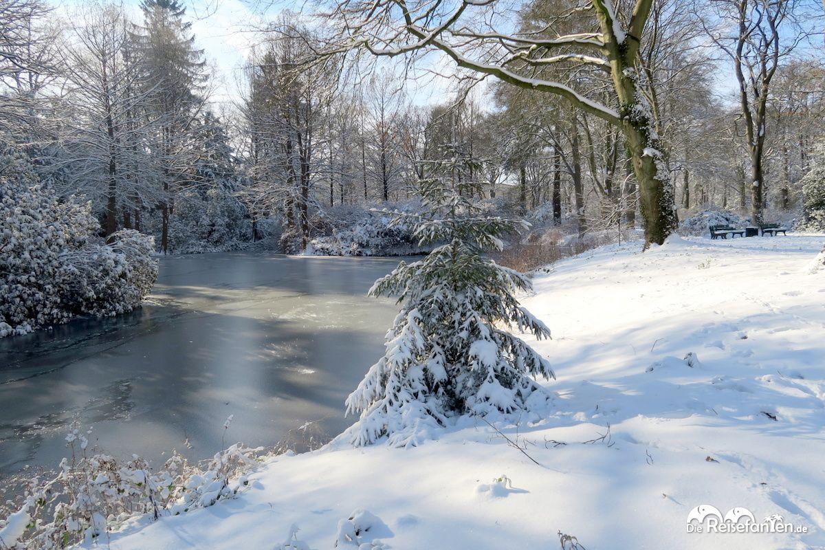 Ein schöner Baum im Rhododendron Park in Bremen im Januar 2021