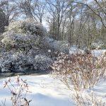 Winterlandschaft im Rhododendron Park in Bremen im Januar 2021