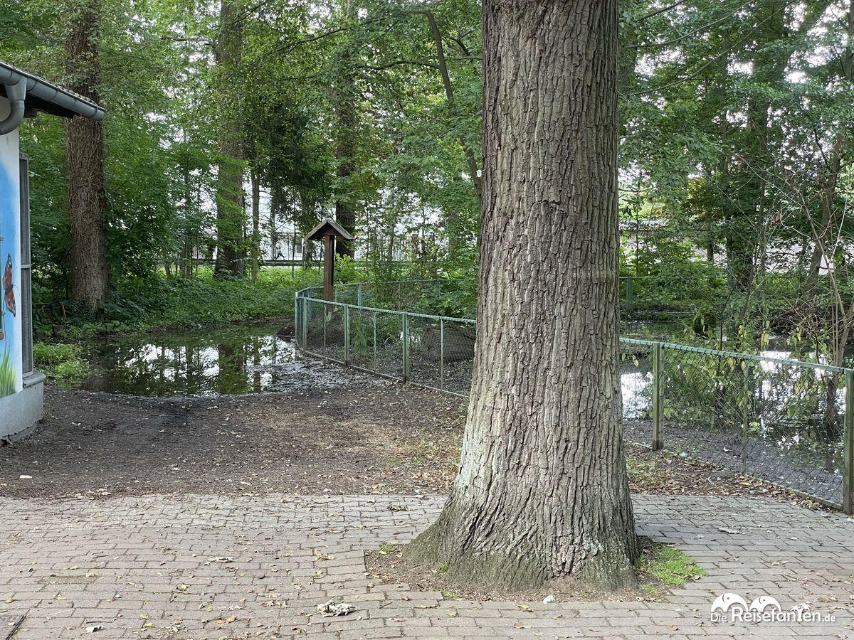 Die Überschwemmungen der letzten Tage sind auch am Vogelpark Haßloch nicht spurlos vorbeigegangen