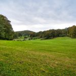 Wiese bei Engelhardsberg